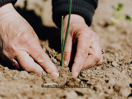 Plant the seeds of your personal development