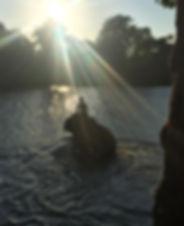 Mahouts love their elephants. Elephant Encounters.