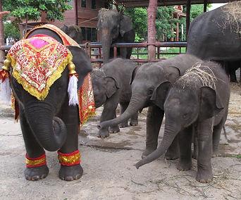 Baby elephants exploring. Elephant Encounters.