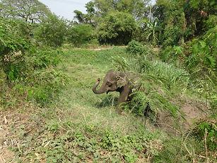 Elephant exploring food options. Elephant Encounters.