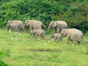 Thailand's elephant culture