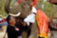Creating a sustainable future for elephants. Elephant Encounters.