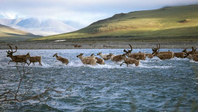 The Fight Over Drilling on the Arctic National Wildlife Refuge