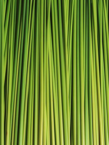 bigstock-Green-Leaf-72553876.jpg