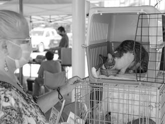 Gran Éxito del Primer Festival Animal