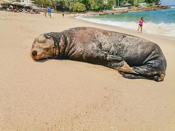 No Estaba Muerto, Dormía en la Playa