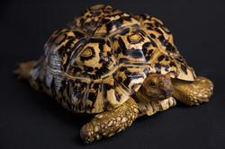 tortoise vet