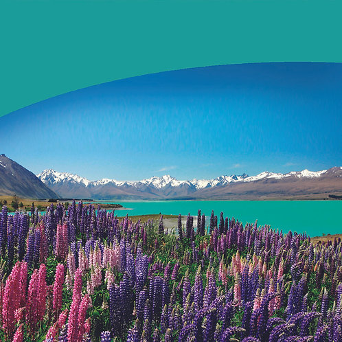 12 Day Tour - NZ Scenic Experience