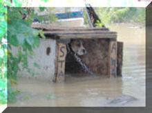 FloodDog_small.jpg
