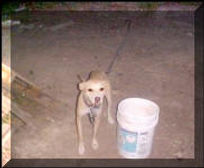Chained-Dog_small.jpg