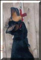 Hung-Dog-Closeup_small.jpg