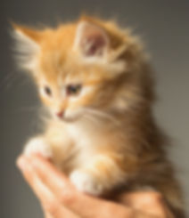 animal-cute-kitten-cat-9413_edited.jpg