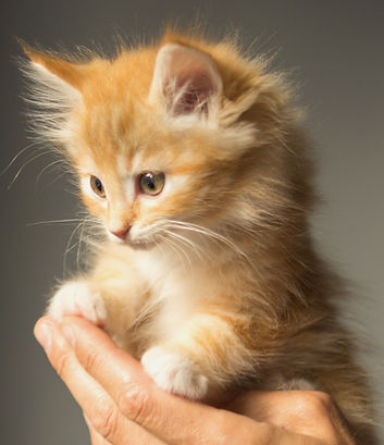animal-cute-kitten-cat-9413_edited.jpg