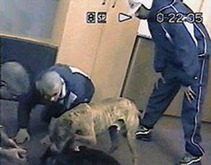 220px-Dog_fighting_gang_members_caught_o
