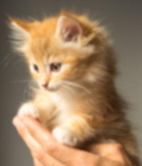 animal-cute-kitten-cat-9413.jpg
