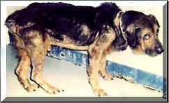 Abused-Dog-LRAS_small.jpg