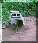 Abused-Pitbull-Dog_small.jpg
