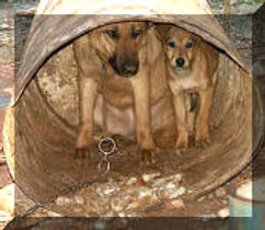 Chained-Mother-Pup_small.jpg