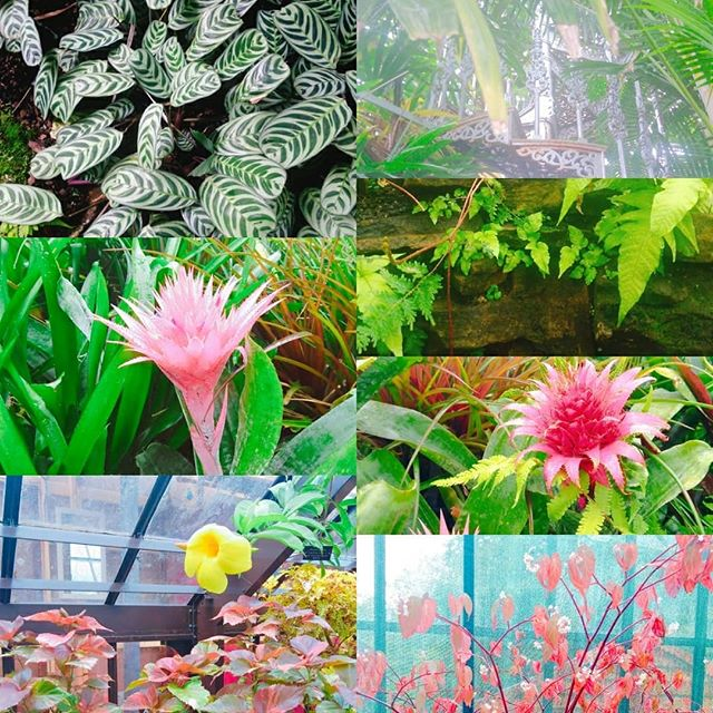 Beautiful tropical plants at the Glasgow Botanic Gardens today. Such amazing colours!! ._._