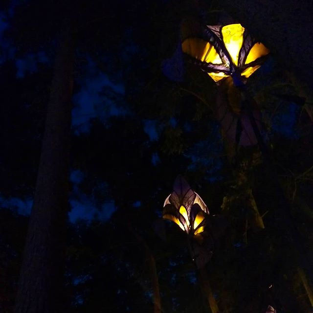 Hanging floral lanterns at night, looking up from a couch in the middle of the woods at _latitudefest such an amazing experience. ._._