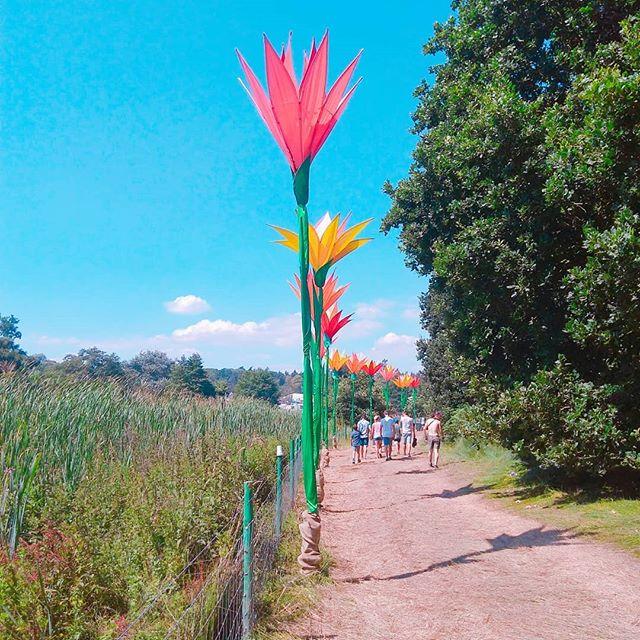 Tall flowers _latitudefest_._._