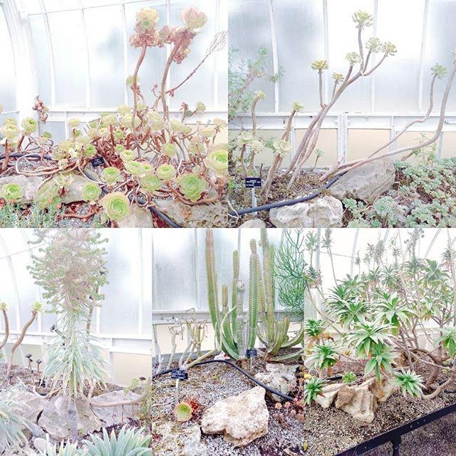 Gorgeous Succulents at the Kibble Palace. ._._