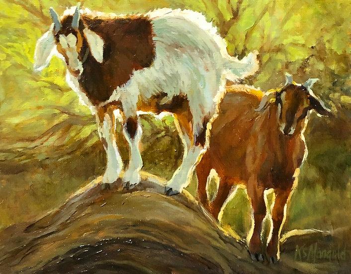 Double Trouble Goats