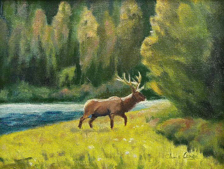 Elk at String Lake