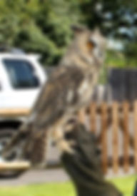 8315926_orig.jpg owls_edited.jpg