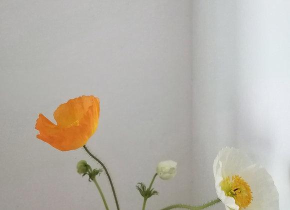 Poppy art poster print, no.6