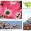 Thumbnail: Cornus florida Rubra