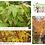Thumbnail: Acer palmatum Sango Kaku