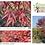 Thumbnail: Acer palmatum Fire Glow Acero rosso