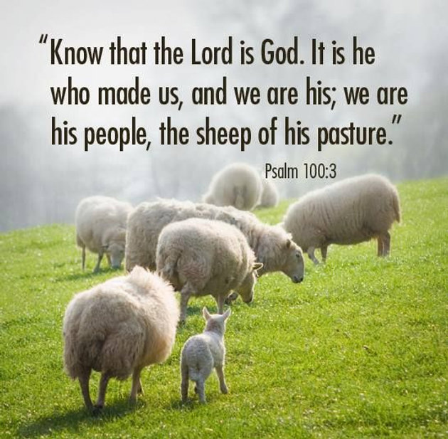 Daily Bible Verse About God Our Shepherd Bible Time