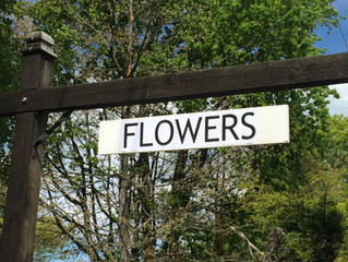 What I wish I'd known before I became a Flower Farmer
