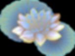 Oriental%252520Lotus_edited_edited_edite
