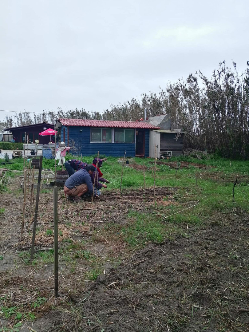 Caring for greenpeas at Terra Minha