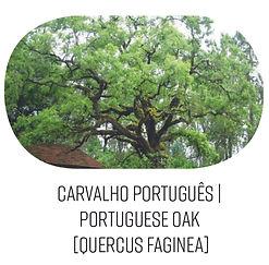 carvalho portugues.jpg