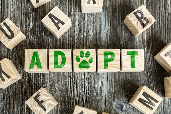Wooden Blocks with the text: Adopt.jpg