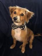 Carson (adoption pending)