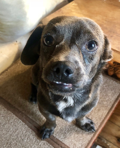 Stan (adoption pending)