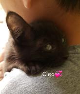 Cleo.jpeg