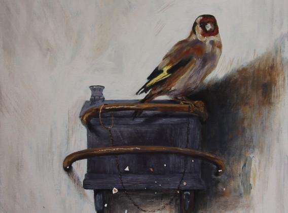 Goldfinch Nita Newman.jpg