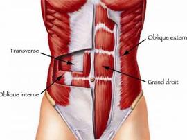 [Focus anatomie] les abdominaux