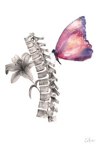 Columna vertebral color