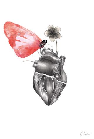 Corazón anatómico color