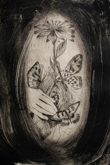 Mi nido de mariposas