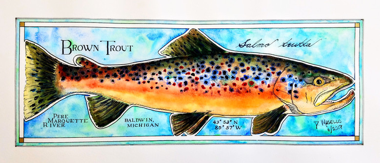 """Brown Trout, 20"""""""
