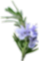 Rosemary sprig (CH)_w.png