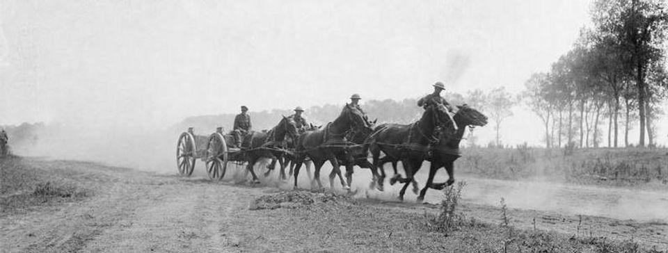 Australian limber with horses.jpg